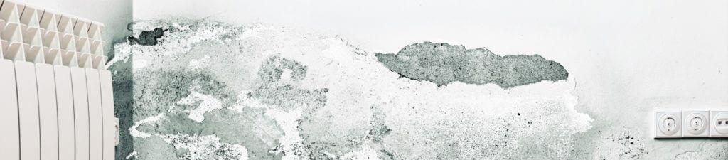 Come eliminare la muffa dai muri di casa? Qualche consiglio