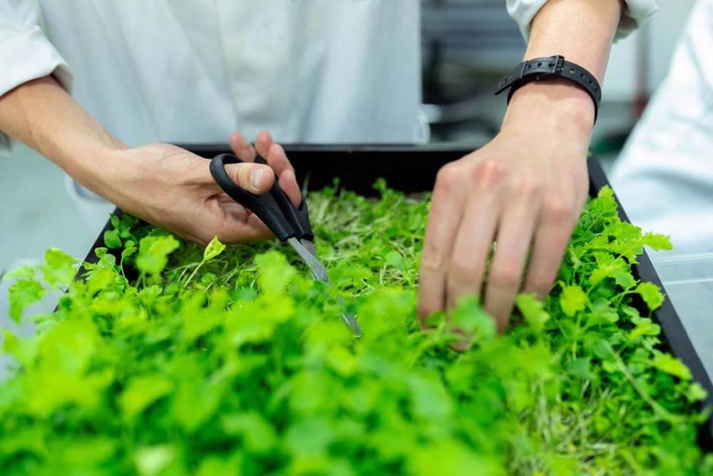 Dedicarsi al giardinaggio per purificare l'aria e la vita dentro casa