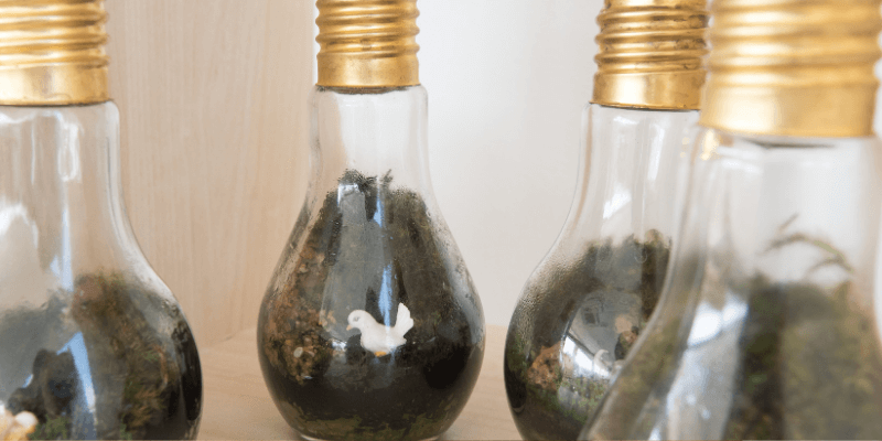 Mini terrario lampadina fai da te   FacileRistrutturare